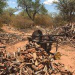 Grillholz aus Namibia